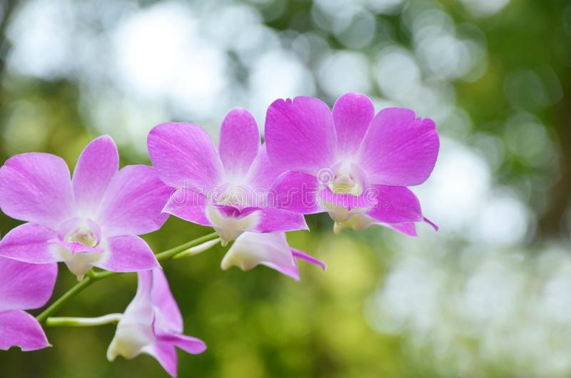 Mooie purpere of violette orchidee tegen vaag of bokeh backg stock afbeelding