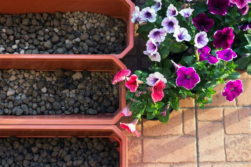Mooie purpere, witte en petuniakoralen, bloemdozen op het balkon op een warme zonnige dag In de dozen voor het planten is de bloe royalty-vrije stock foto's