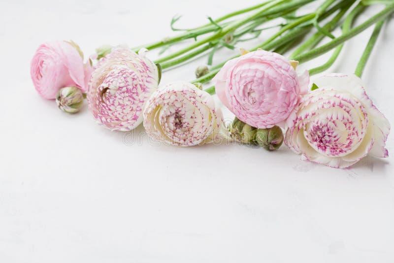 Mooie ranunculus bloemen op witte steenlijst Bloemengrens in pastelkleur Groetkaart voor Moeders of van de Vrouw Dag royalty-vrije stock foto