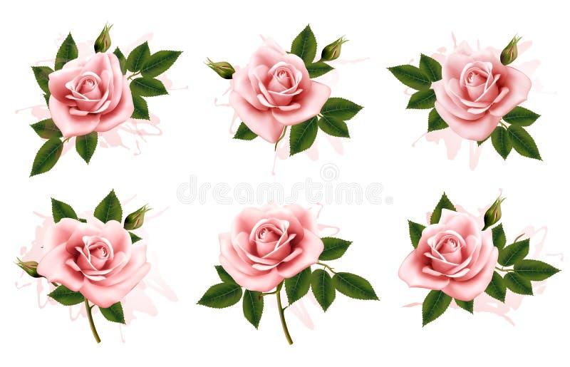 Mooie reeks roze overladen rozen met bladeren royalty-vrije illustratie