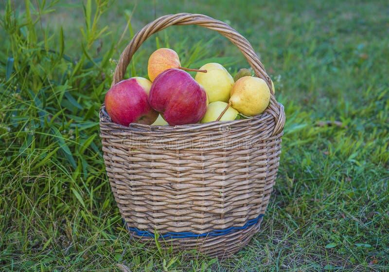 Mooie rijpe appelen en peren in oude rieten mand stock afbeeldingen