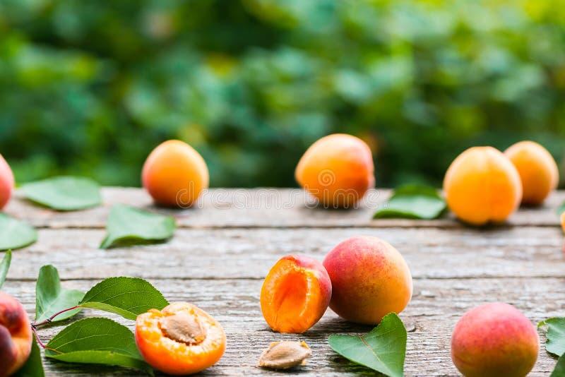 Mooie rijpe oranje abrikozen stock foto