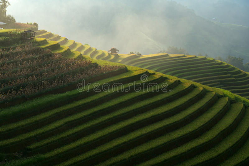 Mooie rijstterrassen royalty-vrije stock afbeeldingen