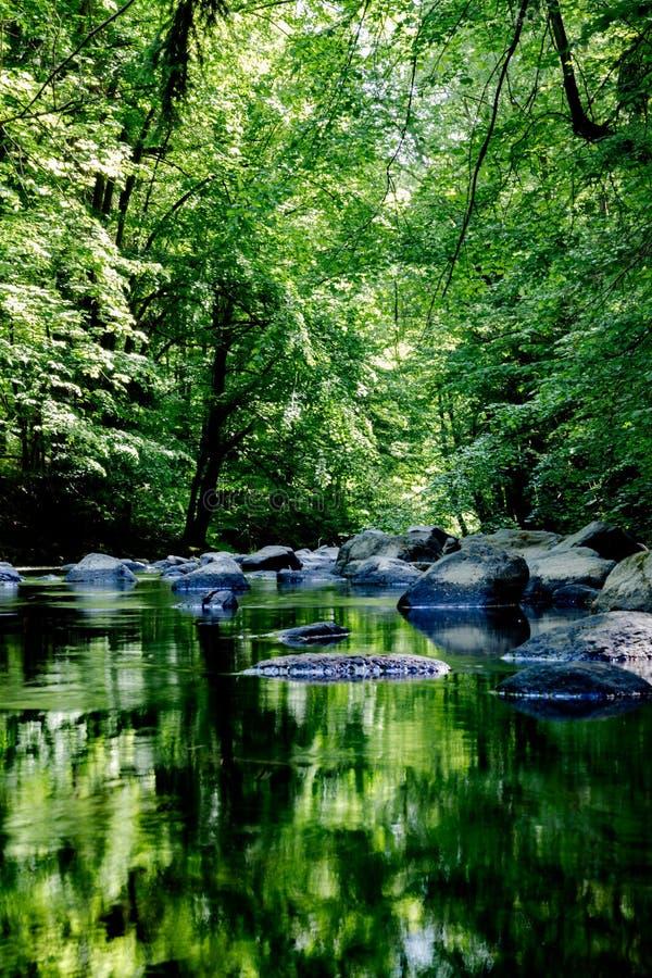 Mooie rivier in het bos royalty-vrije stock afbeelding