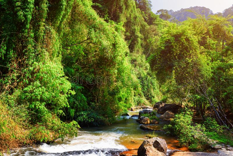 Mooie rivier met glashelder water onder groen hout royalty-vrije stock foto