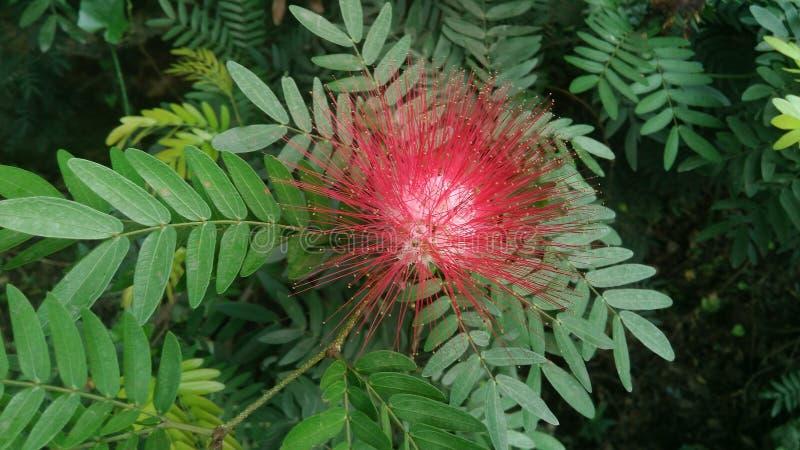 Mooie rode bloem royalty-vrije stock afbeelding