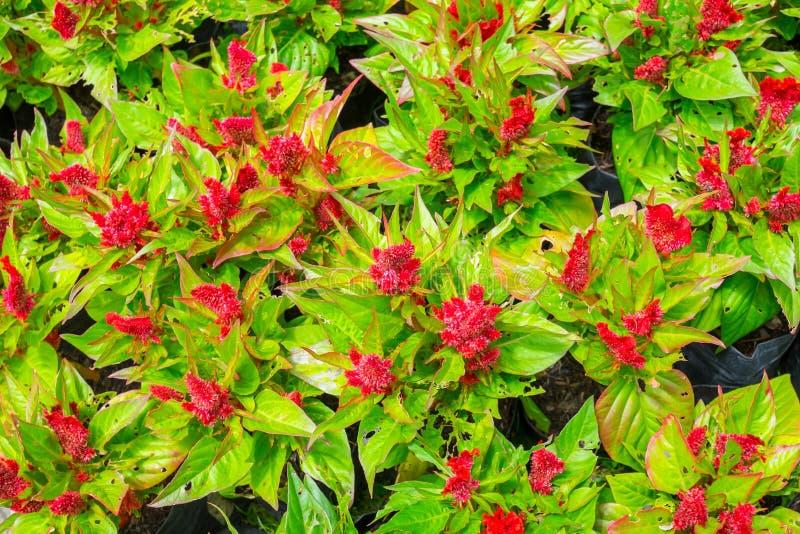 Mooie rode bloem stock foto's