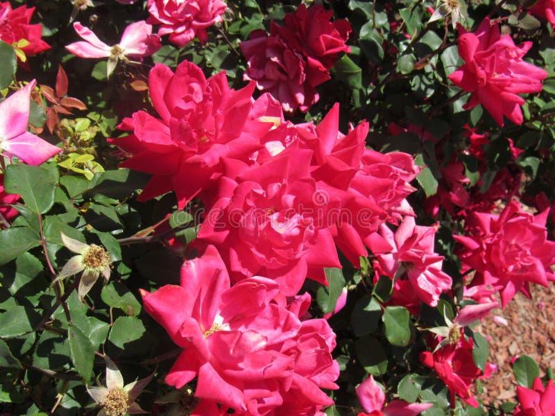 Mooie rode bloemen stock foto's
