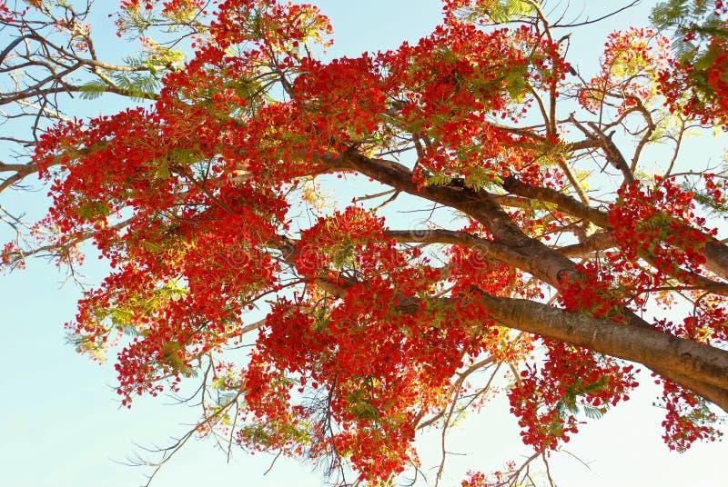 Mooie rode bloemen royalty-vrije stock afbeeldingen