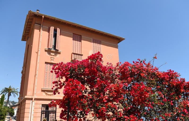 Mooie rode bloemen en een roze huis dichtbij Middellandse Zee royalty-vrije stock foto's