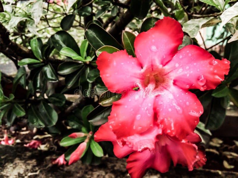 Mooie rode bloemen en waterdruppeltjes op de bloemblaadjes stock afbeeldingen