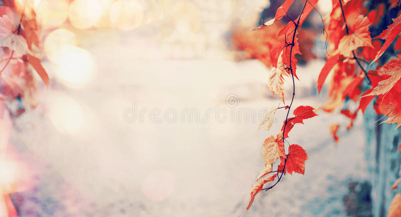 Mooie rode de herfstbladeren met zonlicht en bokeh, de openluchtachtergrond van de dalingsaard