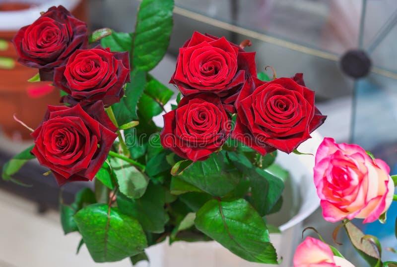Mooie rode rozen voor verkoop stock foto's