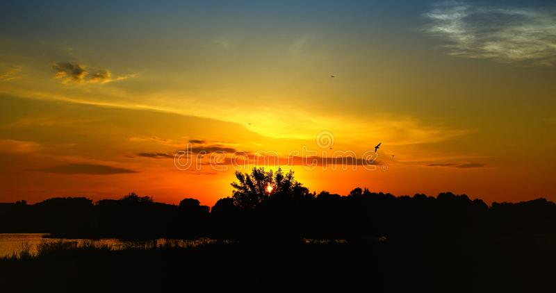 Mooie rode zonsondergang met gewonnen bomen en vogels royalty-vrije stock foto