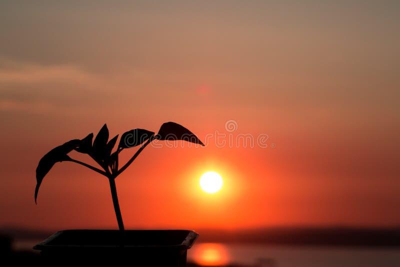 Mooie rode zonsondergang, waartegen een bloem groeit Het nieuwe leven Tegen het overzees royalty-vrije stock fotografie