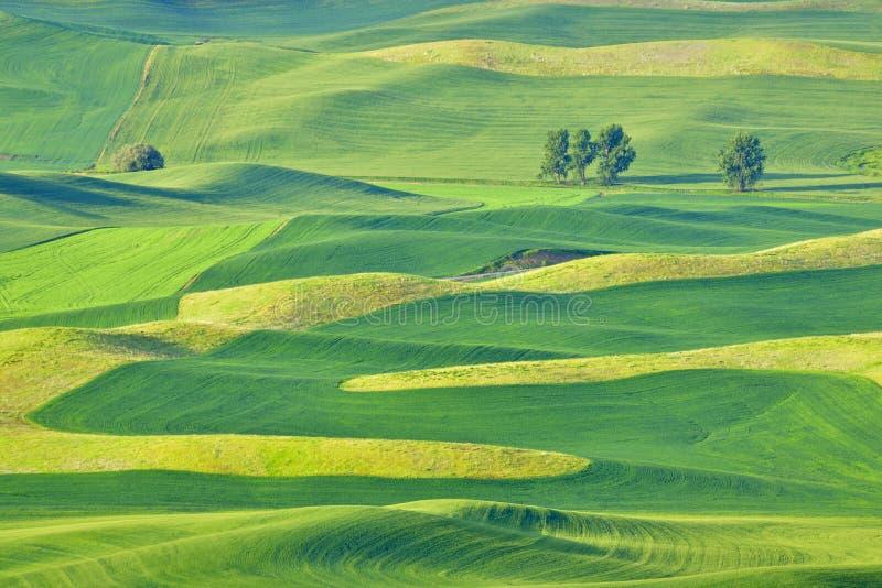 Mooie rollende heuvels in Palouse, Washington stock foto's