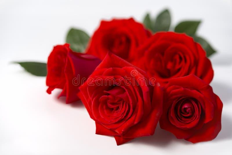Mooie rood nam bloemen op de witte achtergrond toe royalty-vrije stock afbeeldingen