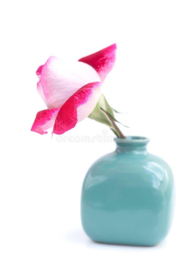 Mooie rood nam in een vaas toe royalty-vrije stock afbeeldingen