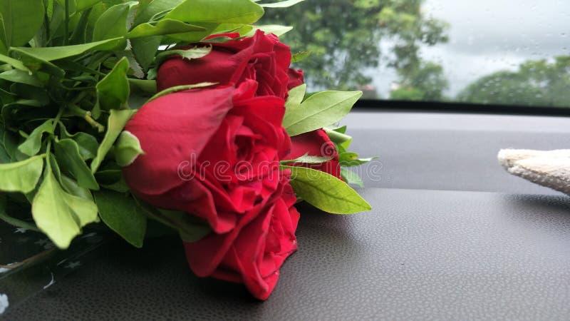 Mooie Rood nam voor Liefde toe stock foto's