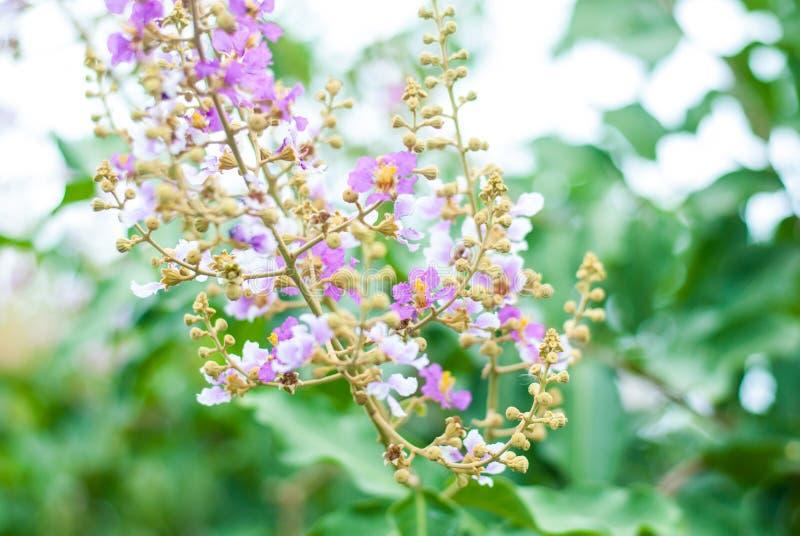 Mooie roze bloem op zijn tak met groene aardachtergrond stock foto