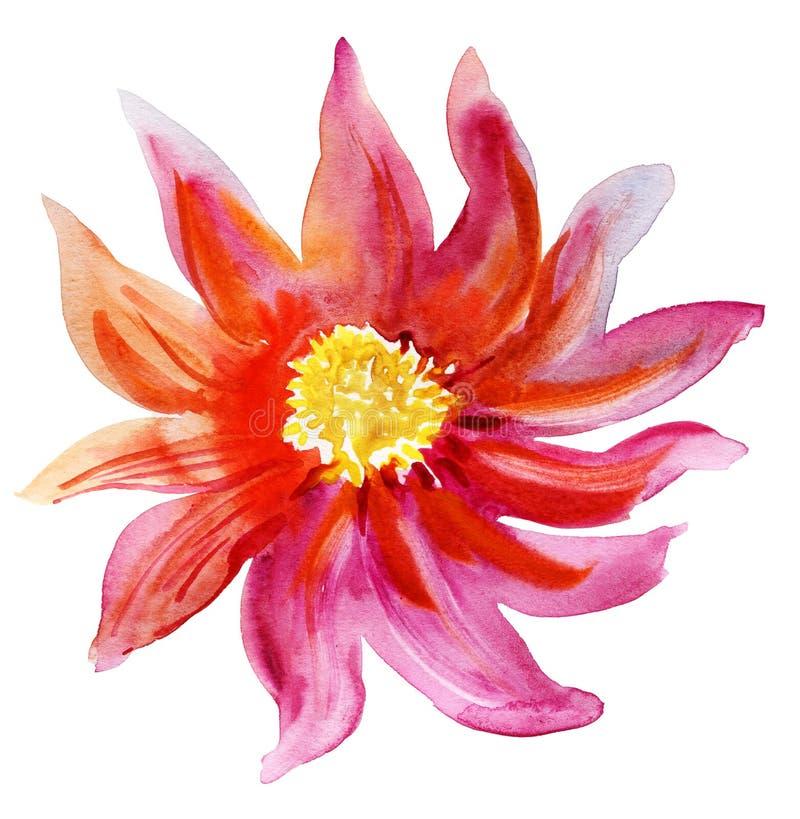 Mooie Roze bloem, Waterverf het schilderen vector illustratie