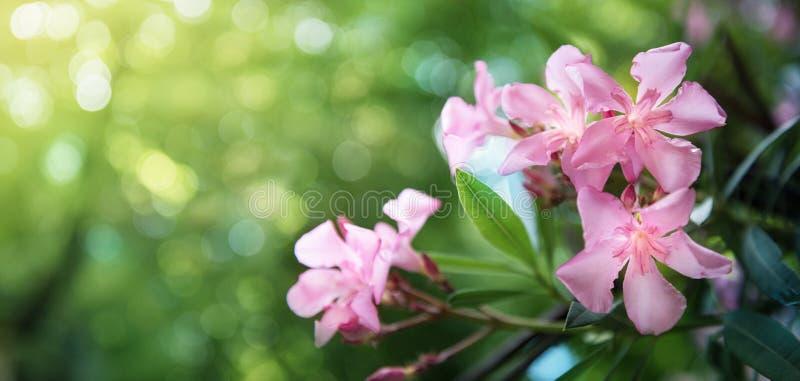 Mooie roze bloemen op achtergrond van de onduidelijk beeld de groene aard stock afbeelding
