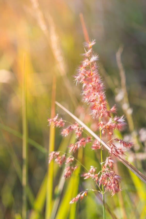 Mooie roze bloemen op greenbackground stock afbeelding