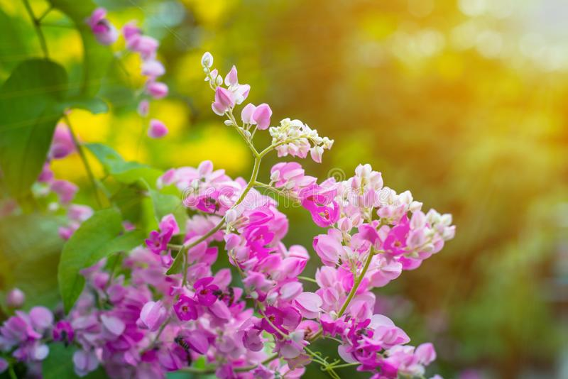 Mooie roze bloemen op groene grasachtergrond royalty-vrije stock afbeelding