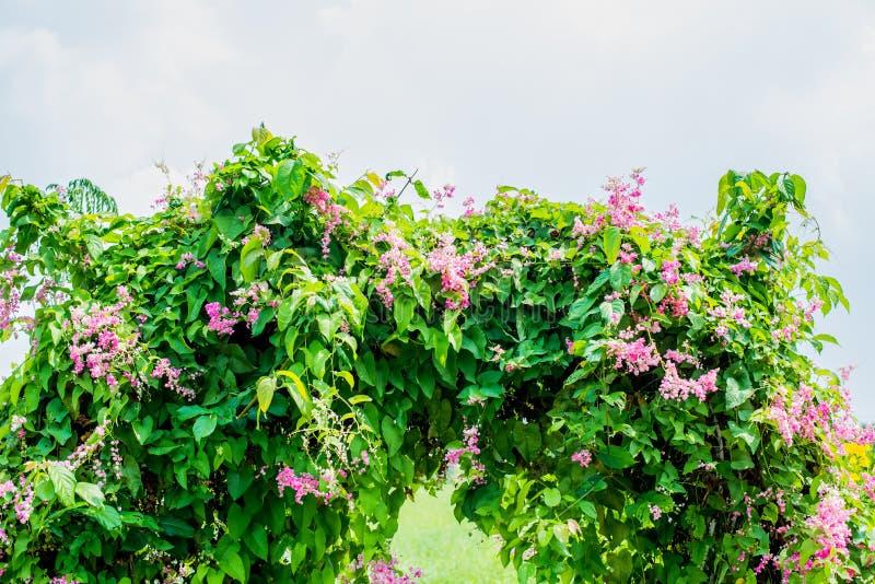 Mooie roze bloemen op groene grasachtergrond stock fotografie
