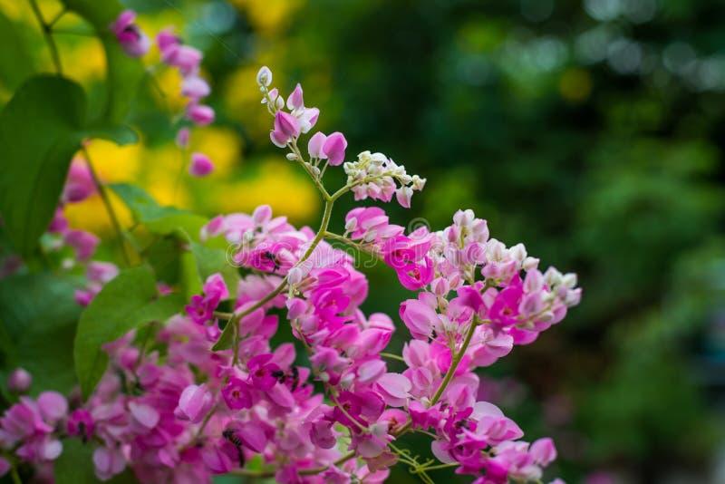 Mooie roze bloemen op groene grasachtergrond royalty-vrije stock foto