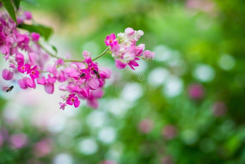 Mooie roze bloemen op groene grasachtergrond stock afbeelding