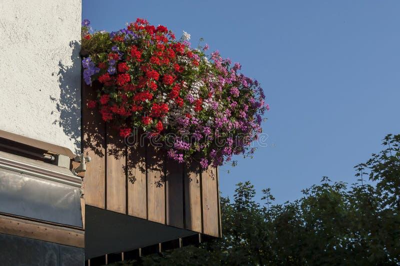 Mooie roze bloemenooievaarsbek die in het balkon, Cortina D ` Ampezzo, Dolomiet, Alpen, Veneto bloeien royalty-vrije stock fotografie