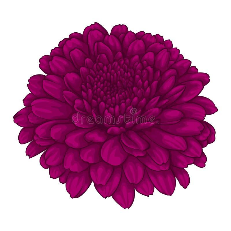 Mooie roze chrysantenbloem effect waterverf op witte achtergrond wordt geïsoleerd die stock illustratie