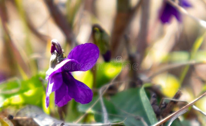 Mooie roze en blauwe kleine bloemen sluit omhoog op de achtergrond van groene gras en bladeren stock afbeelding
