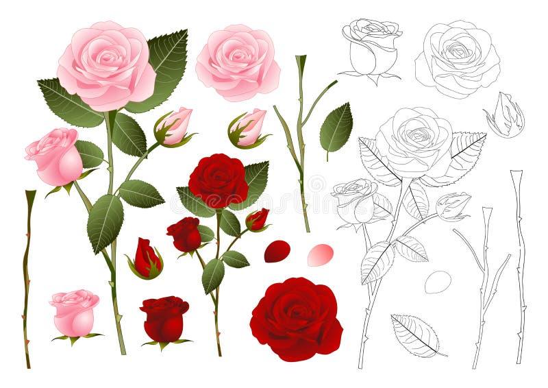 Mooie Roze en Rode Rose Outline - Rosa De dag van de valentijnskaart Vector illustratie royalty-vrije illustratie