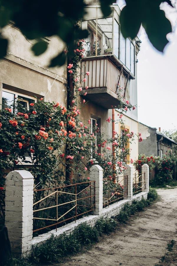 Mooie roze en rode rozen op witte omheining bij oud huis in stre stock foto's