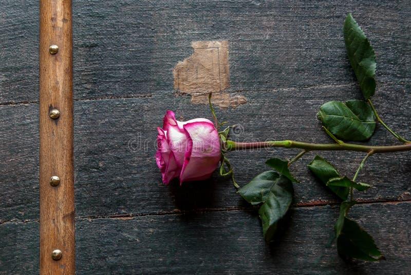 Mooie roze en wit nam toe royalty-vrije stock afbeelding