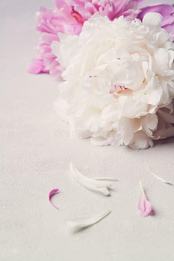 Mooie roze en witte pioenbloemen op steenlijst stock afbeeldingen