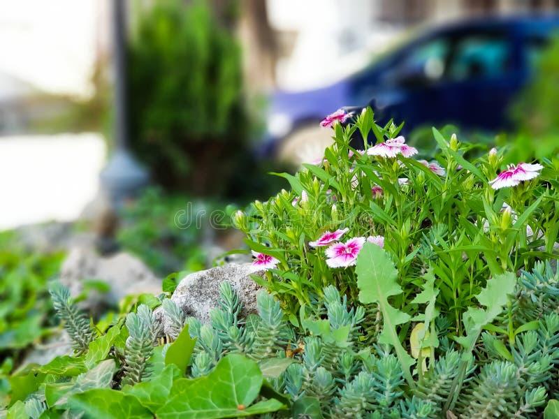 Mooie roze en witte wilde bloemen in gras stock afbeelding