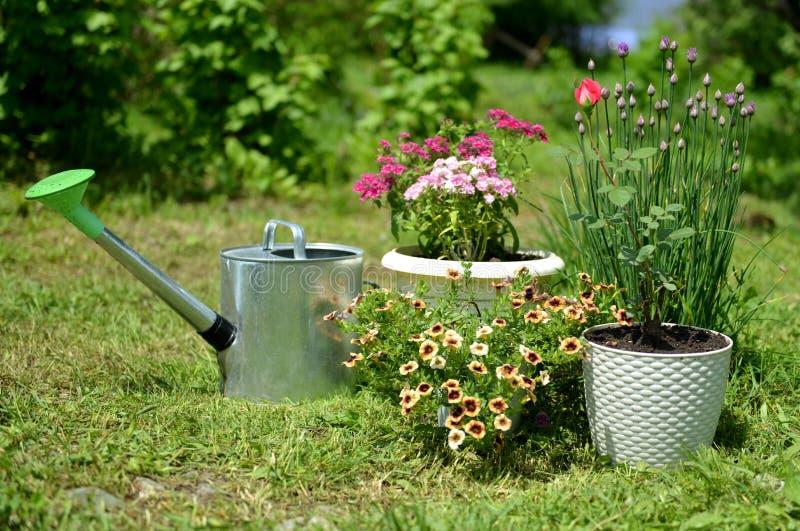 Mooie roze, geflox- en petuniumbloemen in potten met een drenkje op zonnige dag in de tuin royalty-vrije stock afbeeldingen
