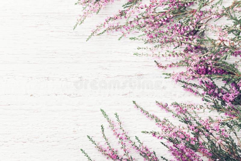 Mooie roze het kadercalluna van de bloemheide vulgaris, Erica, leng op witte hoogste mening rustieke als achtergrond stock foto's