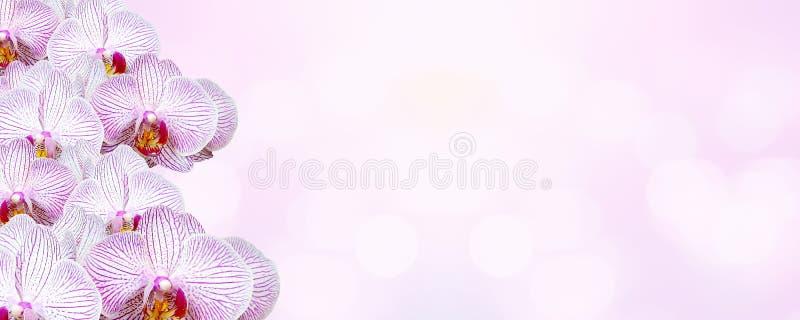 Mooie roze orchideeënachtergrond voor de dag van Valentine ` s royalty-vrije stock afbeeldingen