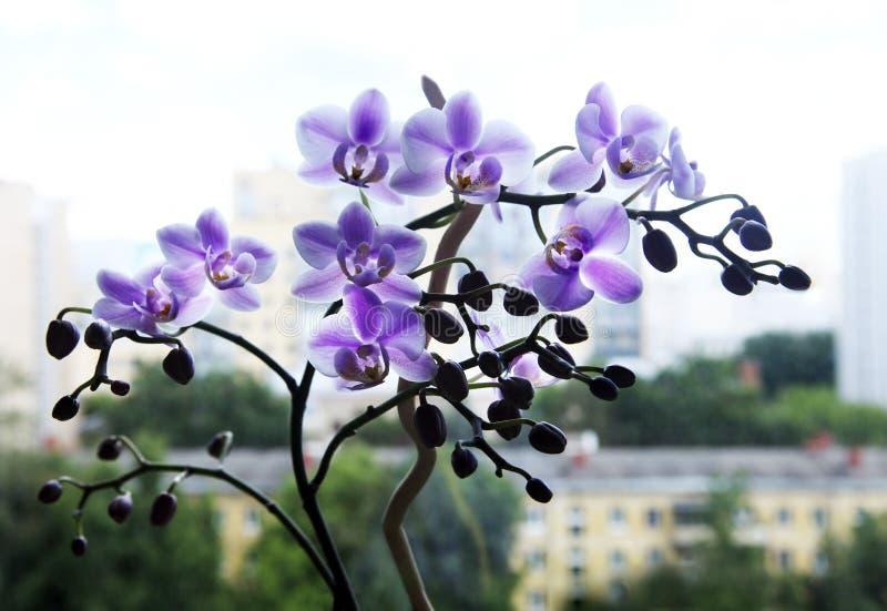 Mooie roze orchideebloemen stock afbeelding