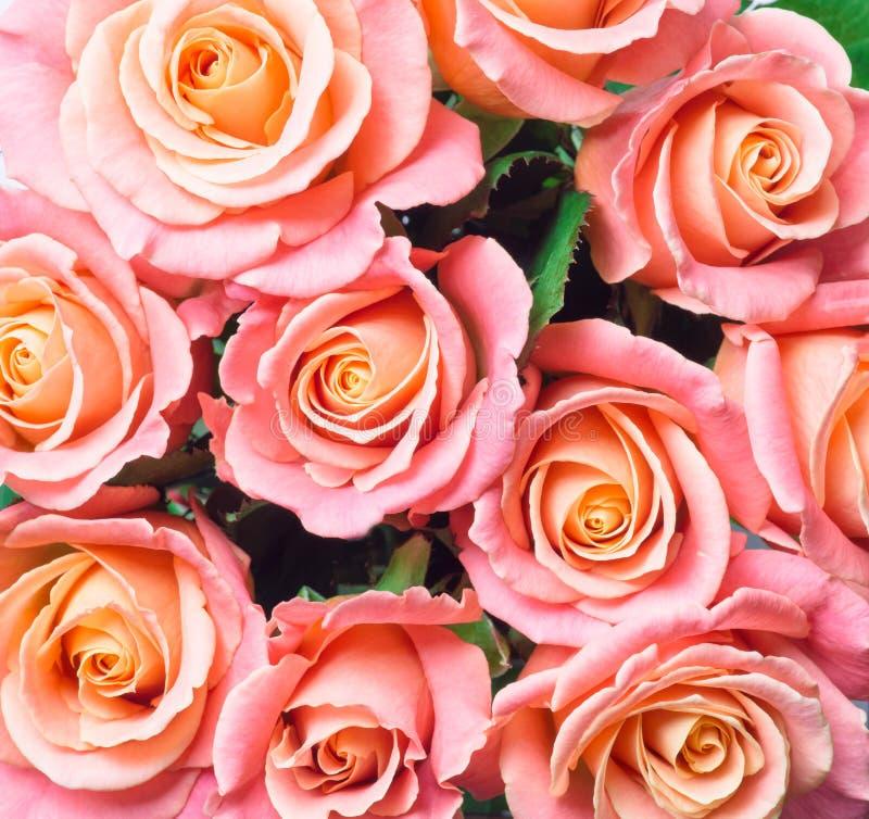 Mooie roze rozen stock afbeelding