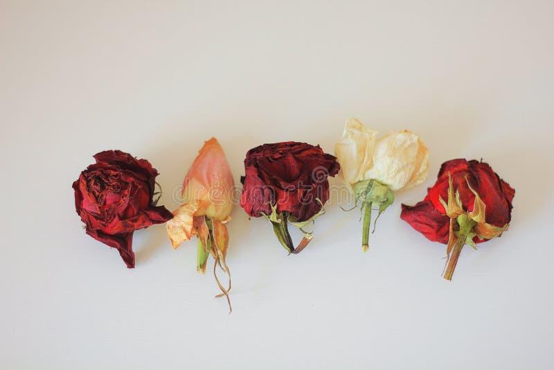 5 mooie rozen royalty-vrije stock fotografie