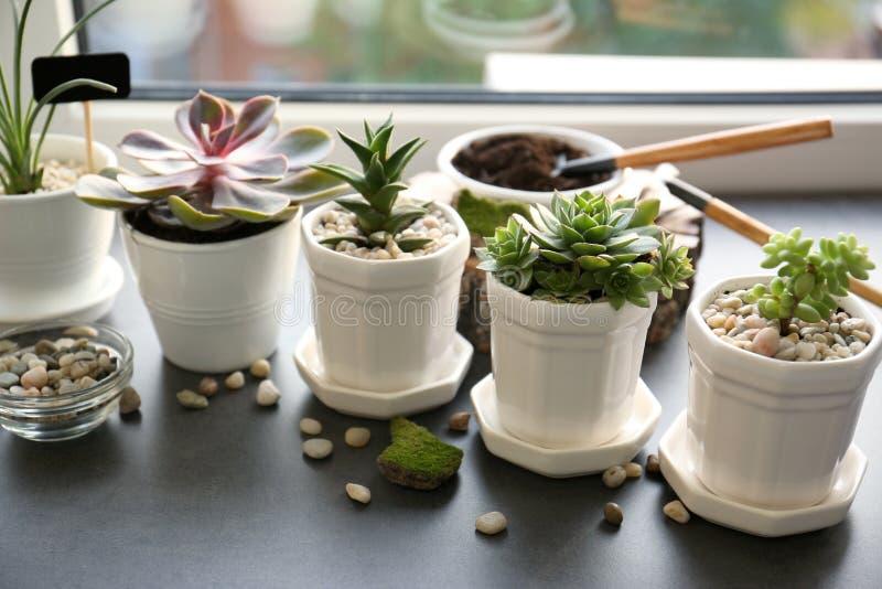 Mooie samenstelling van houseplants stock afbeeldingen