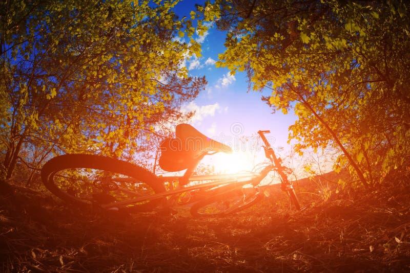 Mooie scène van fiets in het bos stock foto