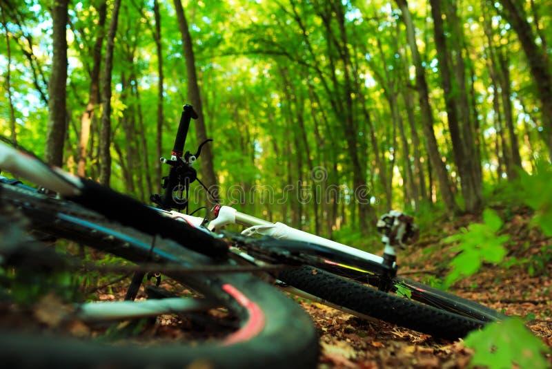 Mooie scène van fiets in het bos royalty-vrije stock afbeelding
