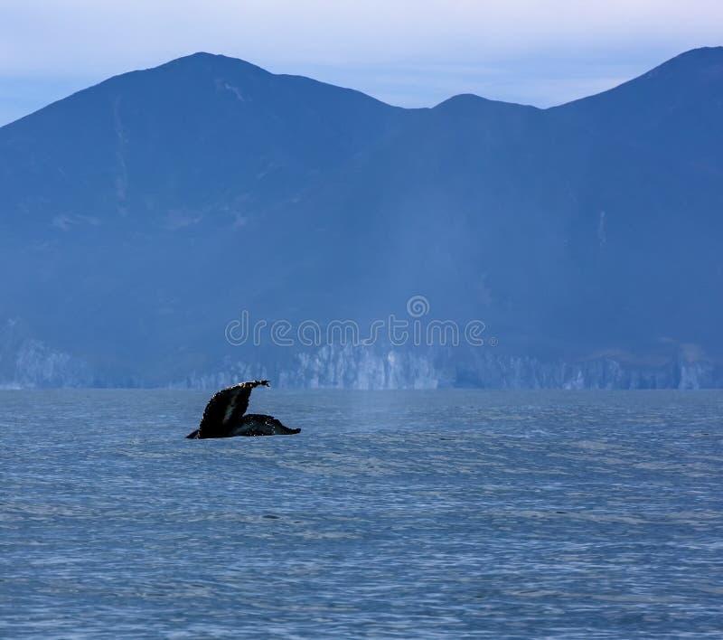 Mooie Seascape met walvisstaart royalty-vrije stock afbeelding