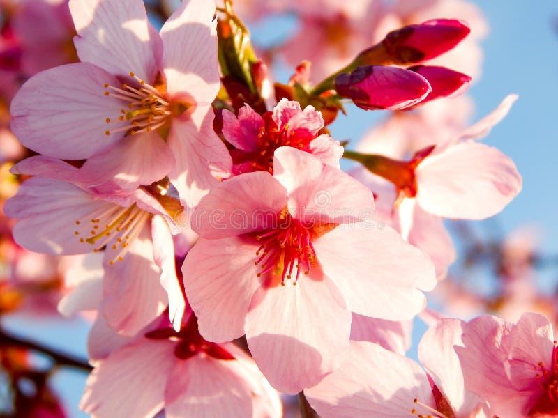 Mooie serie van roze bloemen stock fotografie